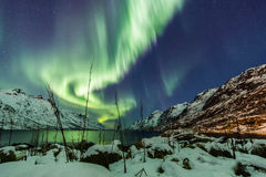 Aurora borealis over Tromso with grass reeds Stock Photo