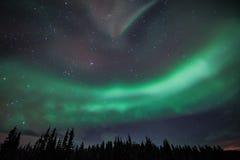Aurora borealis. Over the Yukon Royalty Free Stock Image