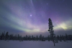 Aurora Borealis, Raattama, 2014 02 21 - 33 Photos stock