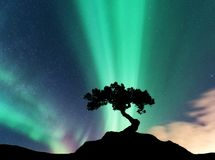 Aurora borealis and silhouette of a tree on the mountain. Aurora. Green and purple northern lights. Sky with stars and polar lights. Night landscape with Stock Images