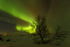 Aurora Borealis and a small tree Royalty Free Stock Photo