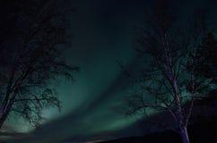 Aurora borealis sobre árboles de abedul Fotografía de archivo libre de regalías
