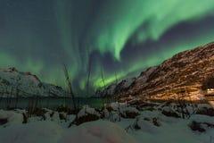 Aurora borealis sobre Tromso com juncos da grama Fotos de Stock Royalty Free