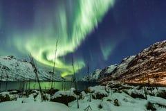 Aurora borealis sopra Tromso con le canne dell'erba Fotografia Stock