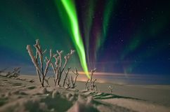 Aurora Borealis in Teriberka royalty free stock image