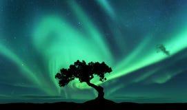 Aurora borealis und Schattenbild eines Baums auf dem Hügel Lizenzfreies Stockbild