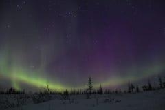 Aurora borealisin taiga stockbild