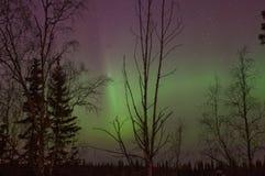 Aurora borialis Royalty Free Stock Image