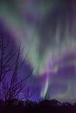 Aurora Butterfly. Northern Lights display in Alaska, taken April 2014 Stock Images
