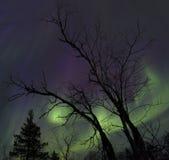 Aurora de Lapland imagens de stock