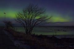 Aurora, luz septentrional, árbol, puerto Imágenes de archivo libres de regalías