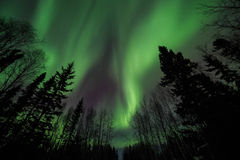Aurora, night at alaska, fairbanks Royalty Free Stock Photos