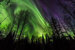Aurora Over the Forest. The aurora borealis dance in an Alaska night stock photos