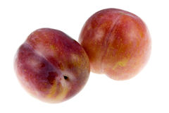 Aurora Plums Royalty Free Stock Photos