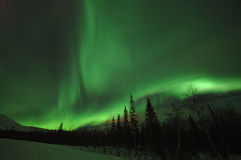 Aurora Polaris. Is in the forest stock photos