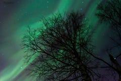 Aurora polaris. Royalty Free Stock Photo