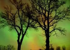Aurora a través de árboles imagen de archivo