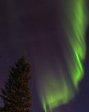 Aurora and Tree Stock Images