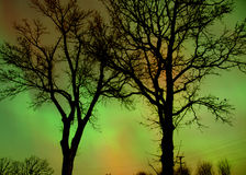 Aurora through trees. Northern lights with silhouetted trees stock image