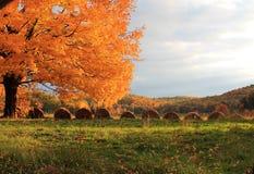 Aurumn träd med rullande hö Royaltyfria Foton