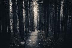 Aus dem Wald heraus Lizenzfreie Stockbilder