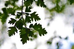 Aus Fokus-Zusammenfassungs-Blättern heraus stockfotografie