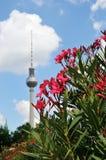 Aus Fokusberlin-Fernsehturm im Sommer heraus Lizenzfreie Stockbilder