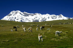 Ausangate Mountain. In Andes (Cordillera Vilcanota), Peru Royalty Free Stock Photography