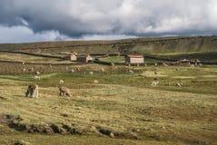 Ausangate, Peru Stockfotografie