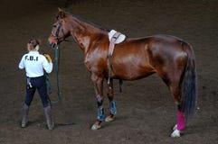 Ausbildung für ein Pferd Stockfotografie