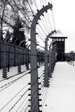 Auschwitz Imagens de Stock