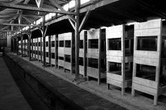 Auschwitz koncentrationsläger Arkivfoto