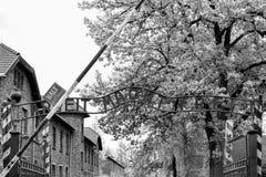 Auschwitz Polen - Augusti 12, 2017: Sikt av koncentrationslägerporten med ett svartvitt foto för slogan Royaltyfri Bild