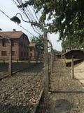 Auschwitz - staket royaltyfri fotografi