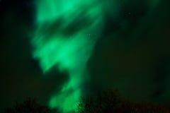 auscultation Στοκ Φωτογραφίες