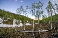 Ausdauer von den lebens- Babybäumen, die von gefallener Birke wachsen lizenzfreie stockbilder