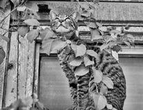 Ausdehnen der Katze Lizenzfreie Stockbilder