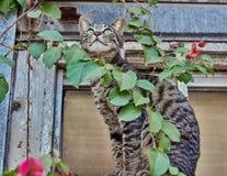 Ausdehnen der Katze Stockbilder