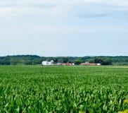 Ausdehnendes Mittelwesten-Maisfeld Lizenzfreie Stockbilder