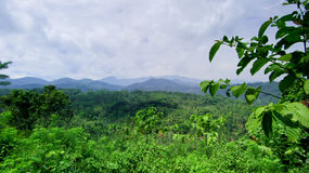 Ausdehnung der hölzernen Wald- und Gebirgsausdehnung Lizenzfreies Stockfoto