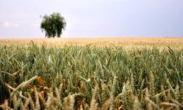 Ausdehnung des Getreides lizenzfreies stockbild