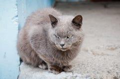 Ausdrucksvoller Blick der grauen gestreiften Katze, die auf der Pflasterung sitzt Lizenzfreie Stockfotografie
