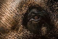 Ausdrucksvolles Elefantauge. stockfoto