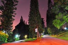 Auseinanderlaufende Gehwege umgeben durch hohe Bäume Lizenzfreie Stockfotografie