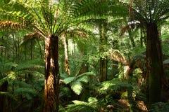 ausen faller fältmt-nationalparken tasmania Royaltyfria Foton