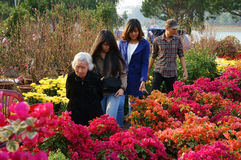 Auserlesener Blumentopf der Leute am Freilichtlandwirtmarkt Lizenzfreie Stockfotografie