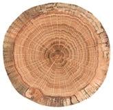 Ausführliche alte Eichenbeschaffenheit als Naturholzhintergrund Baumplatte mit den Wachstumsringen lokalisiert auf weißem Hinterg lizenzfreies stockfoto