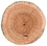 Ausführliche alte Eichenbeschaffenheit als Naturholzhintergrund Baumstumpf mit den Wachstumsringen und -sprüngen lokalisiert auf  stockfotografie