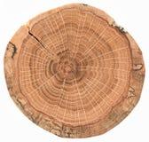 Ausführliche alte Eichenbeschaffenheit als Naturholzhintergrund Baumstumpf mit den Wachstumsringen und -sprüngen lokalisiert auf  lizenzfreie stockfotos