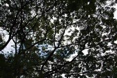 Ausführliche Baumniederlassungen und -blätter Stockfotos